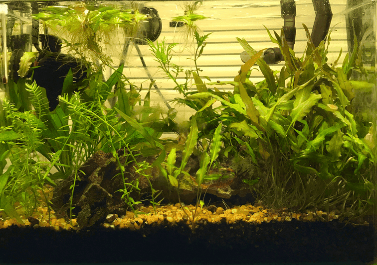 8 gal August 31 2017 reduced.png